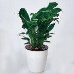 Lazy Flower Pots Automatic Water-absorbing Hydroponic Potted Plants Circular Resin Plastic Flower Pots Double-layer Design Self